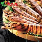 大型活き車海老(230g) 2020 お歳暮 ギフト 贈り物 贈答 お礼 お返し 活エビ エビ 活海老 海老 水産 グルメ 送料無料 お取り寄せグルメ