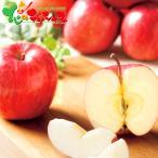 山本観光果樹園 果樹園のふじりんご 5kg 2020 お歳暮 年越し お正月 お年賀 ギフト 贈り物 贈答 お礼 お返し りんご 果物 北海道 送料無料 お取り寄せグルメ