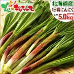 【2017年4月上旬出荷 予約商品】行者にんにく 5kg 北海道産 天然 山菜 行者ニンニク お取り寄せ