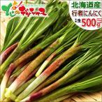 【2017年4月上旬出荷 予約商品】行者にんにく 500g 北海道産 天然 山菜 行者ニンニク お取り寄せ