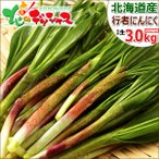 【2017年4月上旬出荷 予約商品】行者にんにく 3kg 北海道産 天然 山菜 行者ニンニク お取り寄せ
