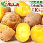 【出荷間近】北海道産 新じゃが じゃがいも ご家庭用 インカのめざめ 10kg 馬鈴薯 ジャガイモ 新じゃが 野菜 ギフト 自宅用 人気 北海道 グルメ お取り寄せ