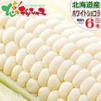 【予約】北海道産 朝採り とうもろこし ホワイトショコラ 朝採り 6本入り 人気 生 甘い 美味しい スイートコーン 北海道 ギフト グルメ お取り寄せ