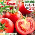 【予約】北海道 南幌町産 ミニトマト 3kg (ラブリー藍orアイコ) トマト ジュース ギフト 贈り物 贈答 プレゼント 人気 北海道産 野菜 グルメ お取り寄せ