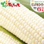 とうもろこし ピュアホワイト 6本入り(南幌町明るい農村ネットワーク生産) 北海道産 白いとうもろこし トウモロコシ ギフト 北海道 お取り寄せ