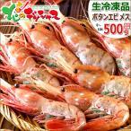 ボタンエビ 500g (BFL/メス子持ち/8-10尾入り/生冷凍) エビ ボタン海老 ギフト 贈り物 贈答 訳あり じゃありません 北海道 食品 グルメ お取り寄せ