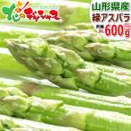【出荷中】山形県 最上町産 グリーンアスパラ 600g (2Lサイズ) アスパラ アスパラガス ギフト 贈り物 野菜 グルメ 送料無料 お取り寄せ
