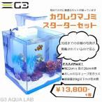 カクレクマノミスターター飼育セット 22cmキューブ型ガラス水槽