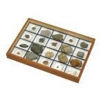 動物化石標本 OF-20 20種組
