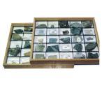 一般化石標本 50種組--79920