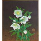 白木菜加 『クリスマスローズ』 色紙絵    絵画 日本画 冬の花 ネコポス メール便