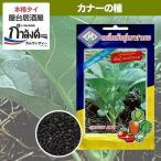 カナー(カイランサイ)種 タイ野菜種