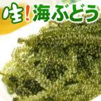 沖縄産 海ぶどう 生 50g パック入り (常温発送!冷蔵品と同梱不可)