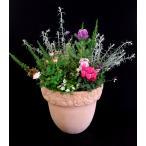 毎年大人気!キュートな寄せ植え(テラコッタ鉢)冬〜春のお花がいっぱい!