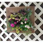 季節の額縁タイプの寄せ植え(スリットボックス使用)