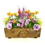 夏の元気が出る寄せ植え◆サマーエレガントBOX(スリム木製プランター )