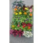 季節の苗花 詰め合わせ 24苗