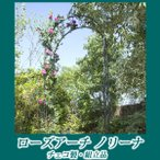 ガーデンアーチ バラ/ ローズアーチ ノリーナ V4123 /ローズ/つる/クレマチス/アイアン/アンティーク/園芸用/ガーデニング/庭