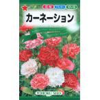 【種子】 カーネーション トーホクのタネ