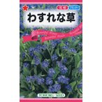 【種子】わすれな草 トーホクのタネ