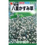【種子】宿根 八重かすみ草 トーホクのタネ