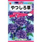 【種子】やつしろ草 (カンパニュラ グロメラータ) トーホクのタネ