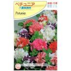 豪華な八重咲きのペチュニア!存在感のある花姿♪