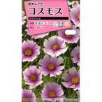 【種子】 コスモス デイドリーム タキイ種苗のタネ