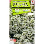 【種子】アリッサム スノークリスタル タキイのタネ