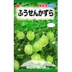 【種子】ふうせんかずら トーホクのタネ