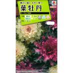 【種子】葉牡丹 さんご混合 タキイのタネ