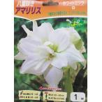 【花球根】八重咲きアマリリス ホワイトニンフ 1球入り