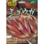野菜球根 ミョウガ 150g