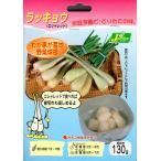 【野菜球根】 ラッキョウ(エシャレット) 130g カネコ種苗