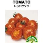【輸入種子】 トマト  レッドゼブラ  藤田種子のタネ