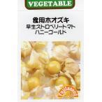 【種子】 食用ホオズキ 早生ストロベリートマト ハニーゴールド 藤田種子