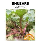 【輸入種子】 ルバーブ 藤田種子のタネ