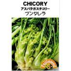 【種子】 CHICORY アスパラガスチコリー プンタレラ 藤田種子のタネ