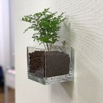 壁掛けプランター・クリア・スクエア S (10cm)ハイドロカルチャーに|賃貸マンション対応|壁を傷めない