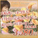 送料無料/シックな装いオレンジのカラー「オレンジ」5号鉢/ご予約商品/2014年母の日/ギフト/カラー/全国一律送料無料