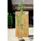 【大型商品】サルスベリ(百日紅)/ナチェ 樹高2.5m前後 露地苗 シンボルツリー 落葉樹