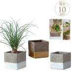プランターポット セメント 陶器 植木鉢 四角 ツートン花器 スクエア 高さ10cm