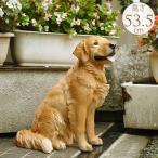 犬 置物 わんちゃん オブジェ リアルアニマル ドッグ ふさふさの質感 本物そっくり ゴールデンレトリバー ちょーだい