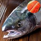 北海道産 生秋鮭 3.5kg(メス/筋子付き) 生 サケ シャケ 鮭 秋鮭 北海道 秋の味覚 グルメ お取り寄せ