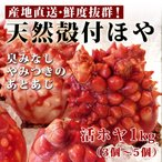 <<送料無料>>朝採れ産直 殻付き天然ほや1kg(活ホヤ3個〜5個) 8/21より(宏八屋)