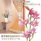 送料無料 石田さんのエントランス シンビジウム シンビジューム 鉢花ギフト  シンピジューム
