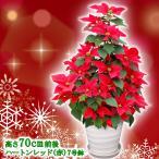 送料無料 お歳暮 ギフト 本物のポインセチアで仕立てたクリスマスツリー 背丈70センチ 7号鉢植え ハートンレッド 赤いポインセチア 大鉢 プリンセチア