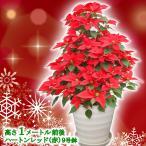 送料無料 お歳暮 ギフト 本物のポインセチアで仕立てたクリスマスツリー 背丈1メートル 9号鉢植え ハートンレッド 赤いポインセチア 大鉢 プリンセチア