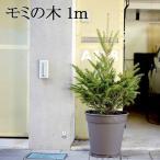 送料無料 本物 モミの木 クリスマスツリー 木  高さ:100cm X'mas クリスマス 人気 もみの木 本格派