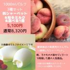 桃 桃スイーツ アイス アイスクリーム ミルク スイーツ ジェラート 1000ml桃シャーベット&知多ミルク&選べる1種